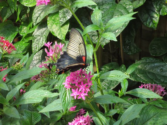 The Original Mackinac Island Butterfly House & Insect World : Such a variety!