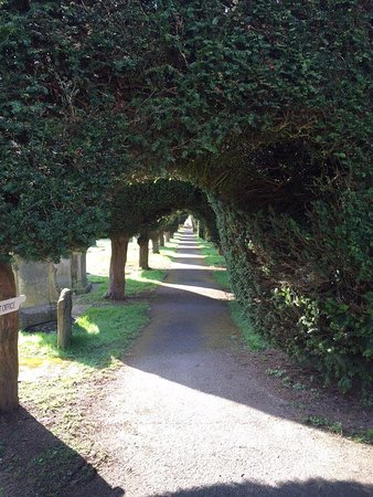Painswick, UK : an exciting burrowed avenue of well clipped yews