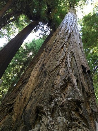 Mill Valley, CA: Redwood bottom to top