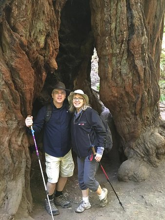Mill Valley, CA: Just the two of us inside one tree!