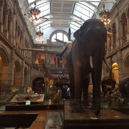 Kelvingrove Art Gallery and Museum: #aliz_scotland - glasgow