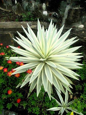 Buenavista, Filipinas: Wonderful plants