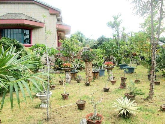 Buenavista, Filipinas: Wonderful plants, very attractive.