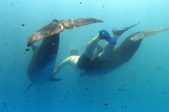 Vallarta Adventures: Swimming with dolphins