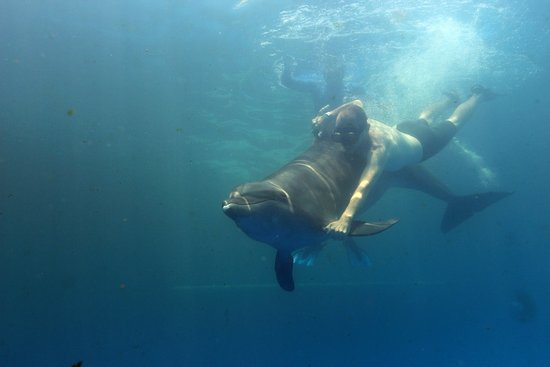 Vallarta Adventures: Swimming with a dolphin