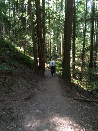 Nanaimo, Canadá: Downhill trail at Englishman River Falls