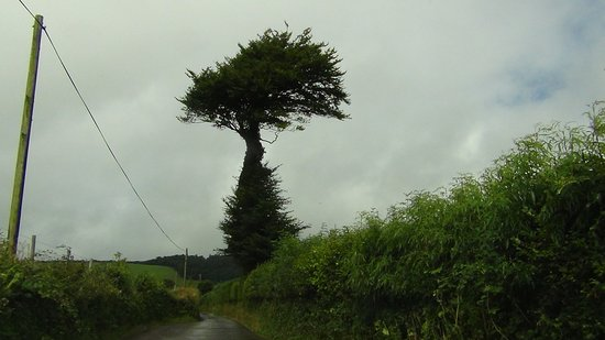 Exmoor National Park, UK: Bizarre tree at the bottom of the valley