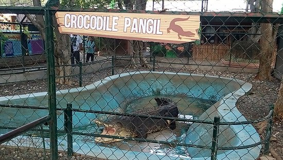 Image result for pangil crocodile park