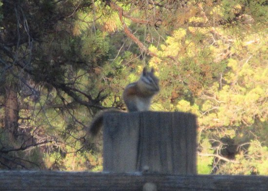 Chipmunk in Parking Lot Area, Best Western Ponderosa Lodge, Sisters, Oregon