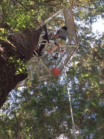 Clayoquot Sound, Canada: Tree Climb