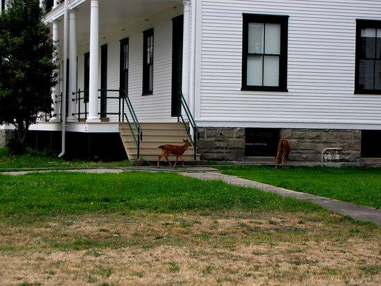 Port Townsend, Etat de Washington : Doe and fawn at Fort Worden.