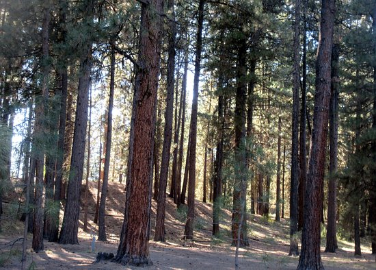 Day Use Area, La Pine State Park, Le Pine, Oregon
