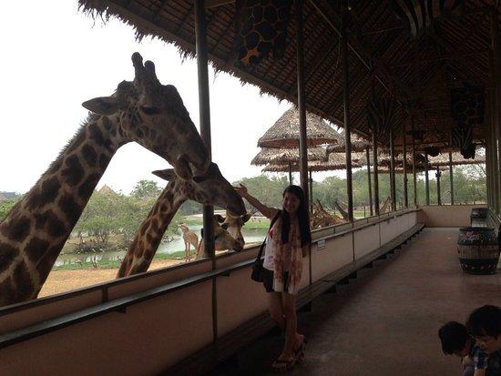 Bangkok Safari World - Picture of Safari World, Bangkok - TripAdvisor