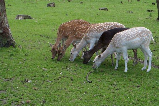 Schweinchen - Picture of Naturwildpark Granat, Haltern am ...