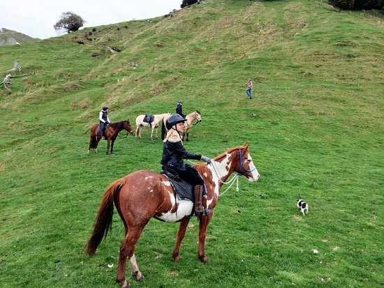 Taihape, Nova Zelândia: I had a great ride with the horses from River Valley Stables! Also great and friendly owner of t