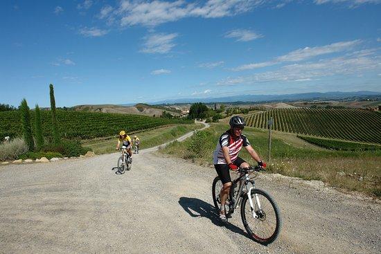 Montaione, Italia: Bike tour along the Historcial Via Francigena
