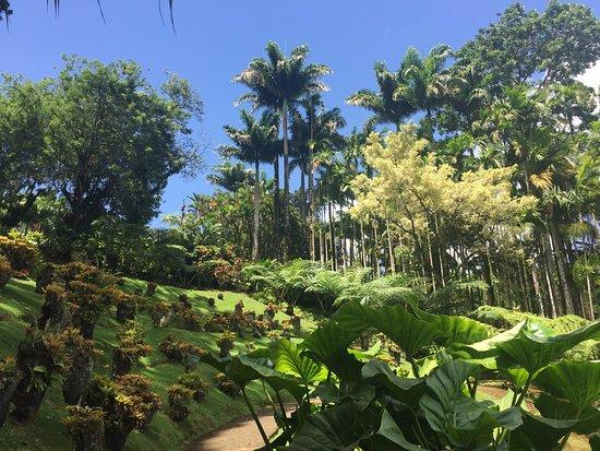 Jardin de Balata: jardin balata