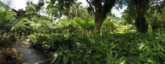 Jardin de Balata照片