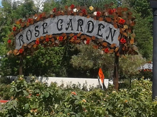 Rose Garden at Mesa Community College: 20160720_143937_large.jpg