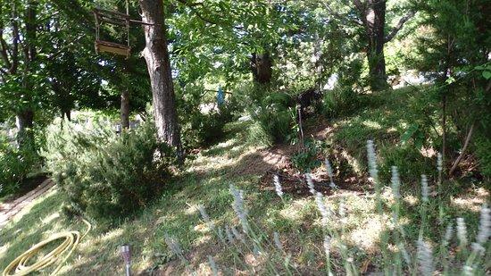 Evisa, Frankrike: Garden