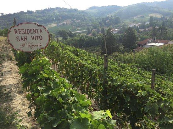 Calamandrana, Włochy: photo1.jpg