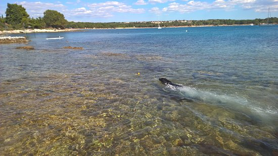 Camp Ulika Rovinj: Beach for dogs