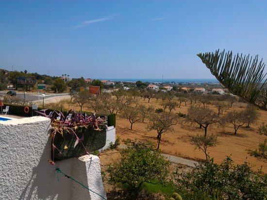 Alcala de Xivert, Hiszpania: Desde la habitación se ve un campo de olivos y la piscina