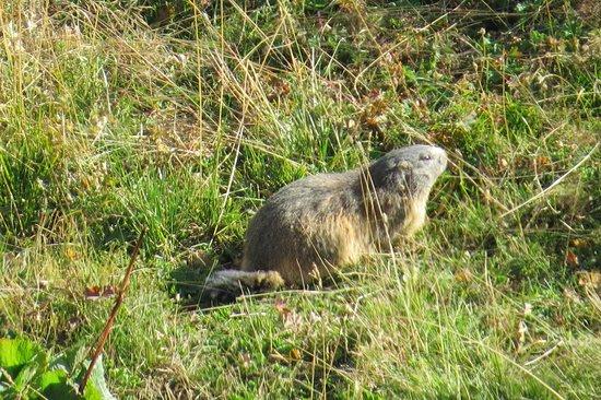 Villard-sur-Doron, Frankrijk: Non loin de l , il y a des Marmottes