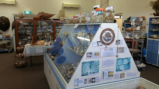 Shell World Yeppoon