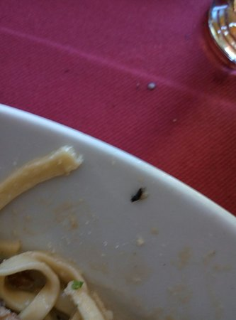 Cointrin, Ελβετία: Bugs in Foot
