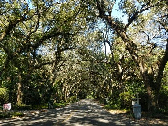 Magnolia Springs, AL: 20160822_155954_001_large.jpg