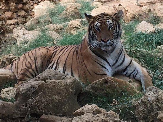 Castellar de la Frontera, Spanien: Animales en semilibertad