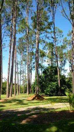 Rockhampton Botanic Gardens and Zoo: Rockhampton Botanic Gardens