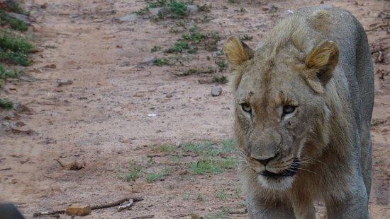 Foto de Shamwari Game Reserve