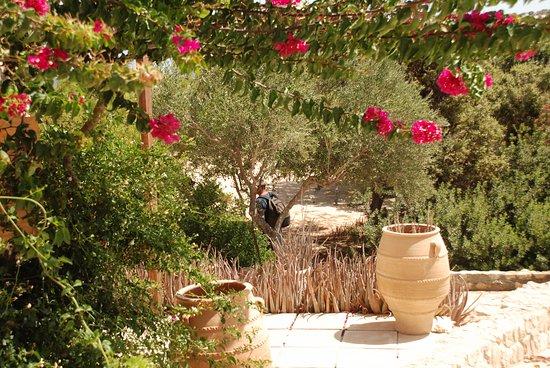 Gavdos, Griechenland: Davanti alla stanza