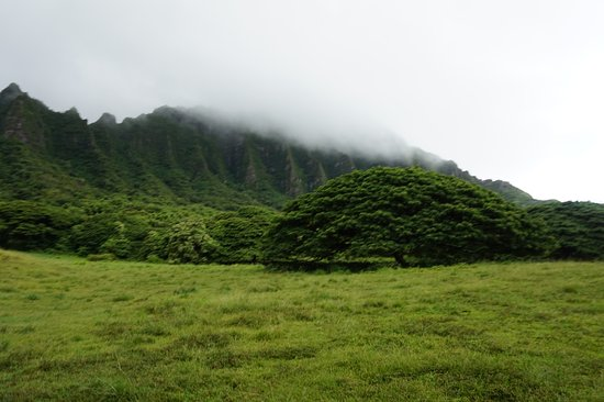 Kaneohe, HI: ジャングルクルーズ途中