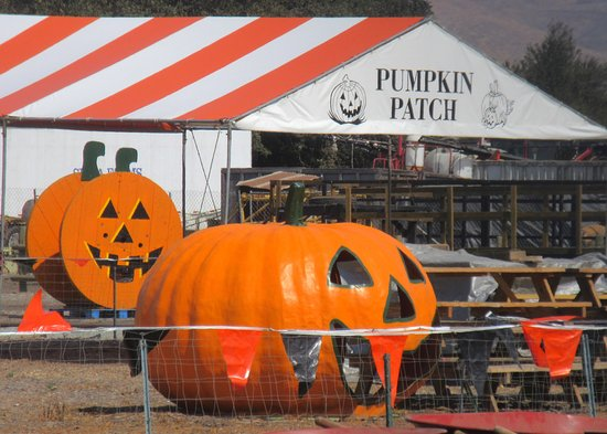 Spina Farms Pumpkin Patch