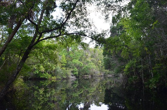 Homosassa Springs, FL: photo8.jpg