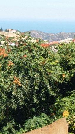 pianta ornamentale terrazza. - Picture of Ristorante \'Da Mirko ...