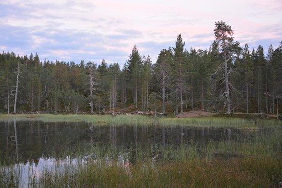 Lapland Hotel Riekonlinna: nella foresta, lì vicino.