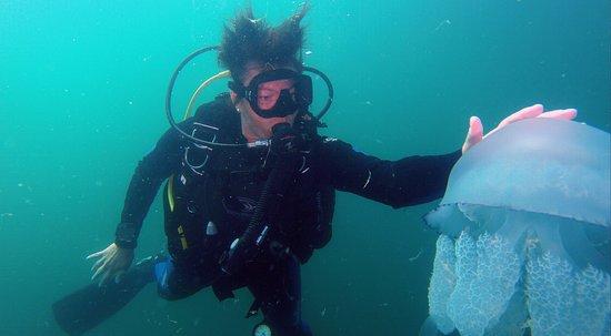 Sozopol, Bulgaria: Big challenge with jellyfish