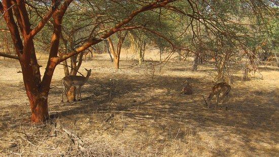 La Petite Cote, Senegal: Animales en la reserva