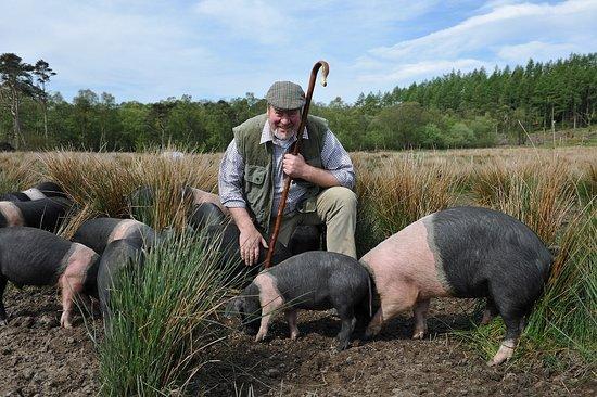 Grange-over-Sands, UK: Stuart Higginson with his rare breed pigs