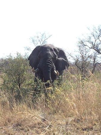 Nelspruit, Sudafrica: Elephants