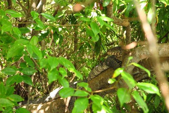 Tangalle, سريلانكا: photo3.jpg