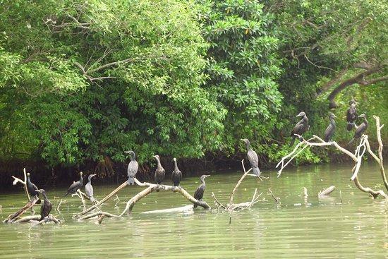 Tangalle, سريلانكا: photo5.jpg