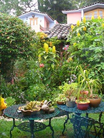 Bela's B&B: Bela's garden