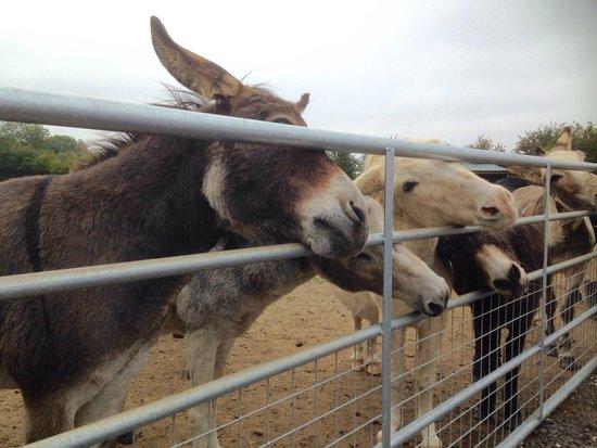Alford, UK: Friendly Greeting