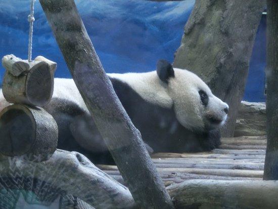 Taipei Zoo: Pan-pan-panda~~