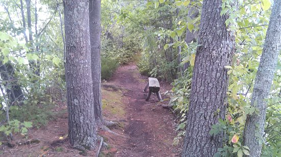 Birchwood, WI: Rest spot on trail